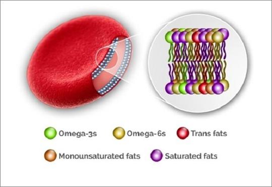 omega-3 mastn0 kyseliny na bunkovej membráne červených krviniek